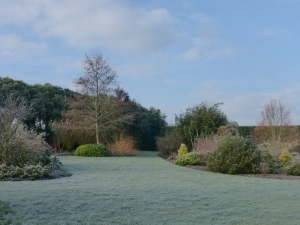 january frost 2015 009