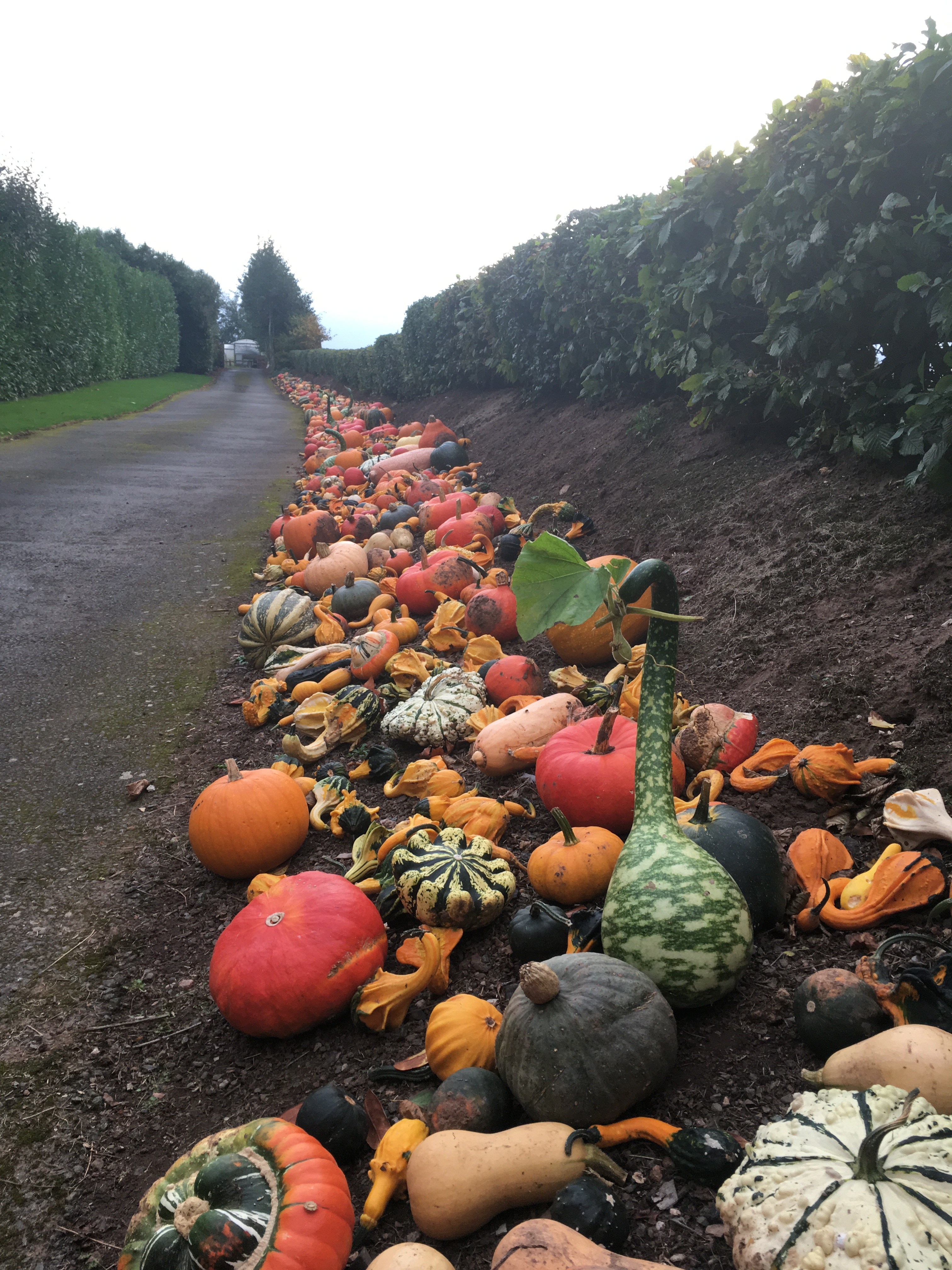 high garden nurseries kenton opening hours tuesday wednesday